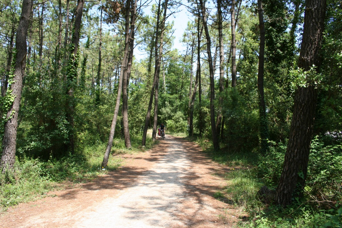 Espace naturel forêt