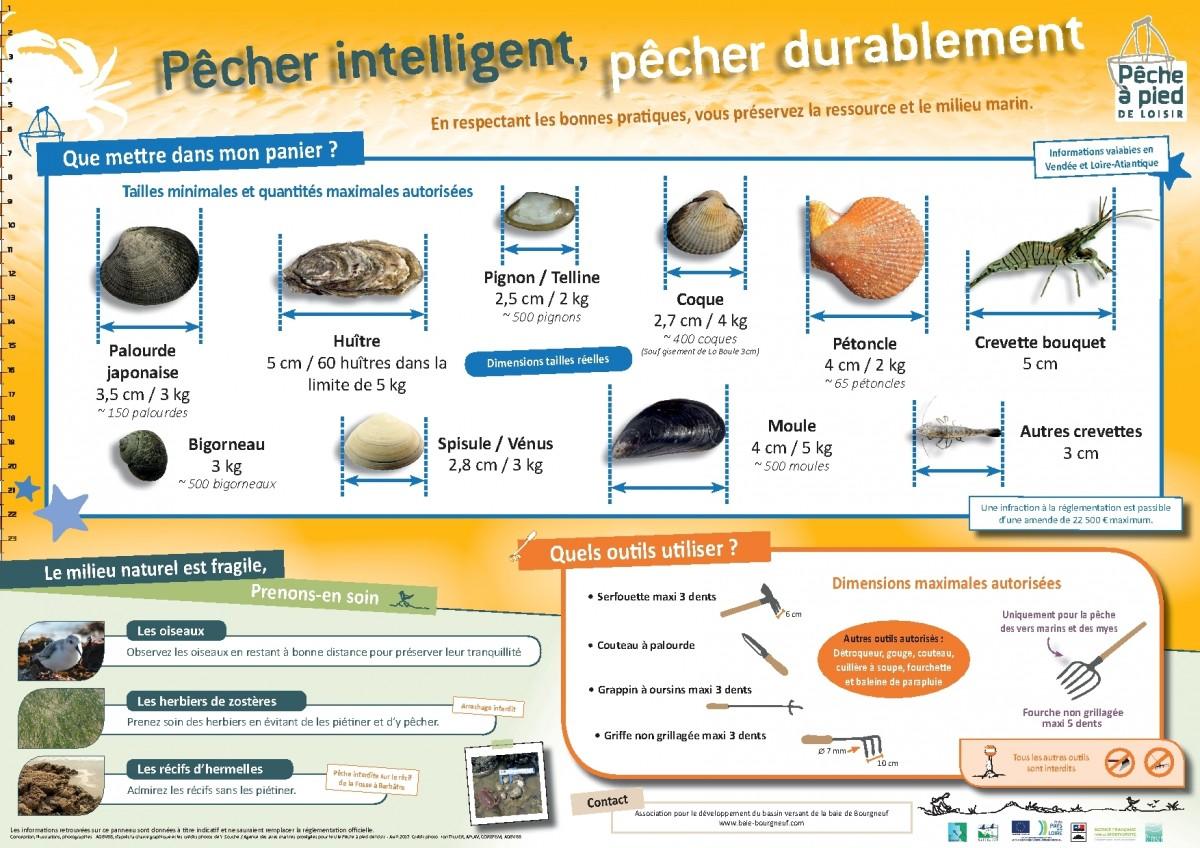 Tailles coquillages et bonnes pratiques
