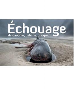 echoauge-7667