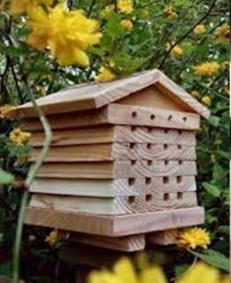ruche-abeille-7098