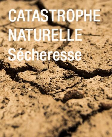 catastrophe-naturelle-lactupetit-7428