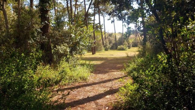 foret-chemin-arbres-472202